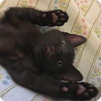 Adopt A Pet :: Derby - Trevose, PA
