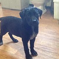 Adopt A Pet :: Lena - Ardmore, OK