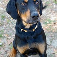 Adopt A Pet :: Chester - Camden, SC