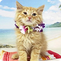 Adopt A Pet :: Bernard - Harrisonburg, VA