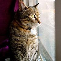Adopt A Pet :: Hollywood - St. Charles, MO