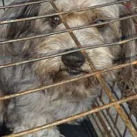 Adopt A Pet :: Augusta - Chiefland, FL
