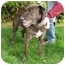 Photo 4 - German Shepherd Dog Mix Dog for adoption in Berkeley, California - Kyle