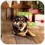 Photo 2 - Rottweiler/German Shepherd Dog Mix Dog for adoption in Portland, Oregon - Homer