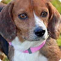 Adopt A Pet :: Baby Girl - Clinton, LA