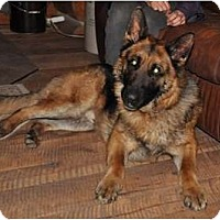 Adopt A Pet :: Smokey - Hamilton, MT