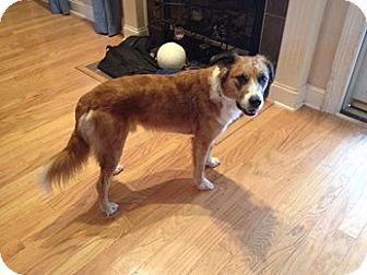 Australian Shepherd Mix Dog for adoption in Hagerstown, Maryland - Deogi