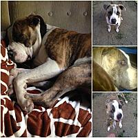 Adopt A Pet :: Mr. Wigglesworth - Sylacauga, AL
