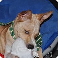 Adopt A Pet :: Jazzy - Tumwater, WA