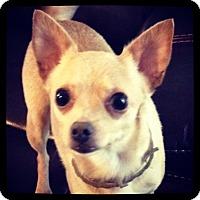 Adopt A Pet :: Coco - Grand Bay, AL