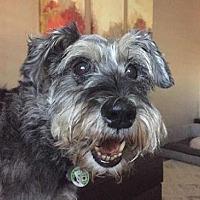 Adopt A Pet :: Marti - Scottsdale, AZ