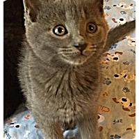 Adopt A Pet :: Charlotte - Plymouth, MN