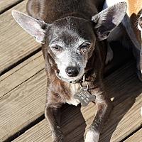 Adopt A Pet :: Ernie - Hayes, VA