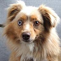 Adopt A Pet :: Spencer - Colorado Springs, CO