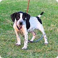 Adopt A Pet :: DEA - Bedminster, NJ