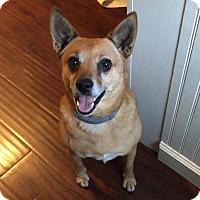 Adopt A Pet :: Lake - Brattleboro, VT