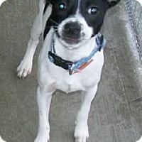 Adopt A Pet :: Skipper - Norris City, IL