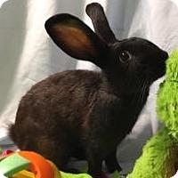 Adopt A Pet :: Perry - Woburn, MA