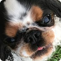 Adopt A Pet :: Freckles - Cumberland, MD