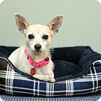 Adopt A Pet :: Fawna - Troy, MI