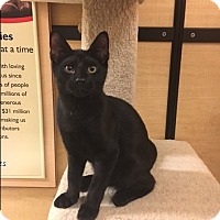 Adopt A Pet :: Tiki - Jackson, NJ