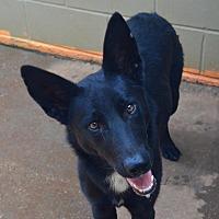 Adopt A Pet :: Blackjack - Greeneville, TN