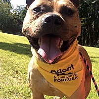 Adopt A Pet :: Sheehan in CT - East Hartford, CT