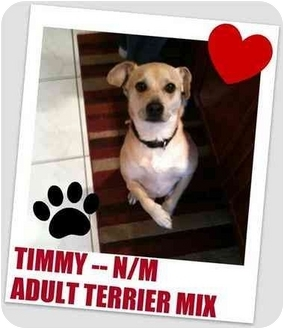 Terrier (Unknown Type, Small) Mix Dog for adoption in Hollywood, Florida - TIMMY