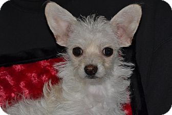 Terrier (Unknown Type, Small) Mix Puppy for adoption in Sacramento, California - Ashley and Aubry