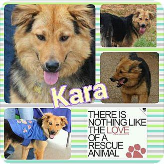 Golden Retriever/Shepherd (Unknown Type) Mix Dog for adoption in McDonough, Georgia - Kara