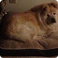 Adopt A Pet :: REMINGTON - Dix Hills, NY