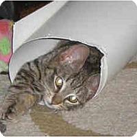 Adopt A Pet :: Gerri - New York, NY