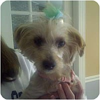 Adopt A Pet :: Graci - Columbus, OH