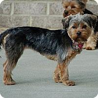 Adopt A Pet :: Sandy - Charlotte, NC