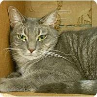 Adopt A Pet :: Smudge - Maywood, NJ