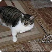 Adopt A Pet :: Joey - North Boston, NY