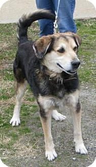 Shepherd (Unknown Type) Mix Dog for adoption in Mineral, Virginia - rebel