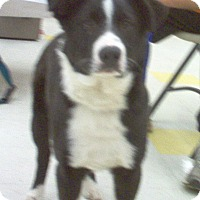 Adopt A Pet :: Buster - Evergreen Park, IL