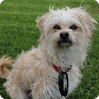 Adopt A Pet :: Skye - Mission Viejo, CA
