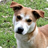 Adopt A Pet :: Roadie - Lufkin, TX