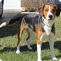 Adopt A Pet :: Ethan- Illinois - Wood Dale, IL
