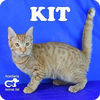 Domestic Shorthair Kitten for adoption in Carencro, Louisiana - Kit