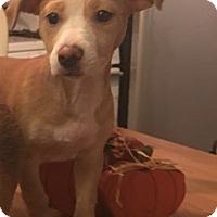 Adopt A Pet :: Emmie - Santa Monica, CA