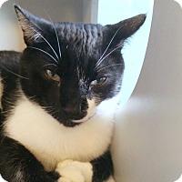 Adopt A Pet :: Boston - Sarasota, FL