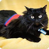 Adopt A Pet :: Keesa - Colorado Springs, CO
