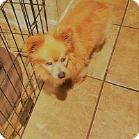 Adopt A Pet :: Willie - conroe, TX