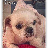 Adopt A Pet :: Joplin - Las Vegas, NV