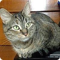 Adopt A Pet :: Lotta - Port Jervis, NY
