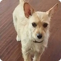 Adopt A Pet :: APRIL - Hurricane, UT