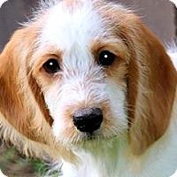 Adopt A Pet :: BOGART(OUR